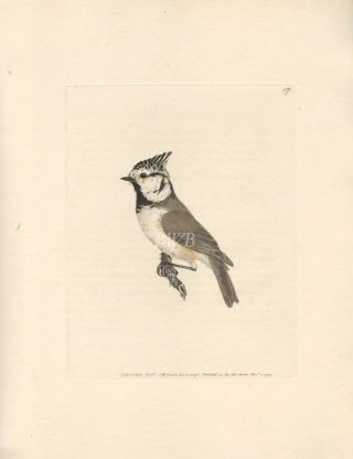 Crested Titmouse. William Lewin